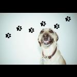 Pfotenspur Hund als Wandtatto